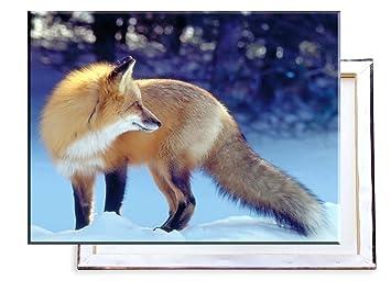 Fuchs Im Winter Schnee 80x60 Cm Bilder Kunstdrucke Fertig Auf