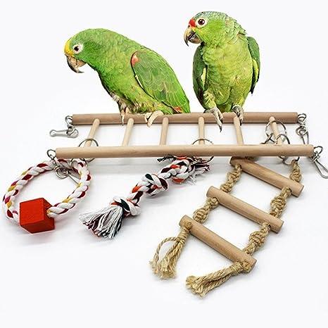 Conures Macaws pájaros pájaros pájaros balancín de madera loro ...