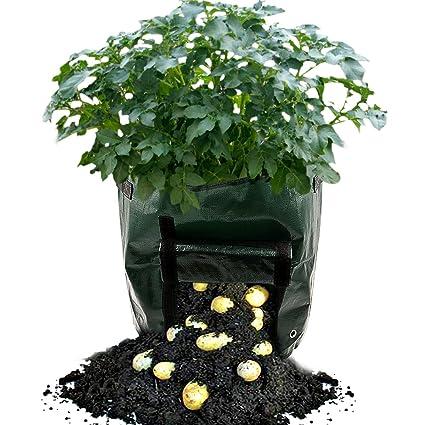 Amazon.com: kpao plantación bolsas de crecimiento crecer 7 ...