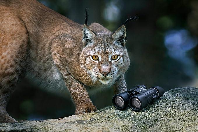Steiner wildlife xp fernglas amazon kamera
