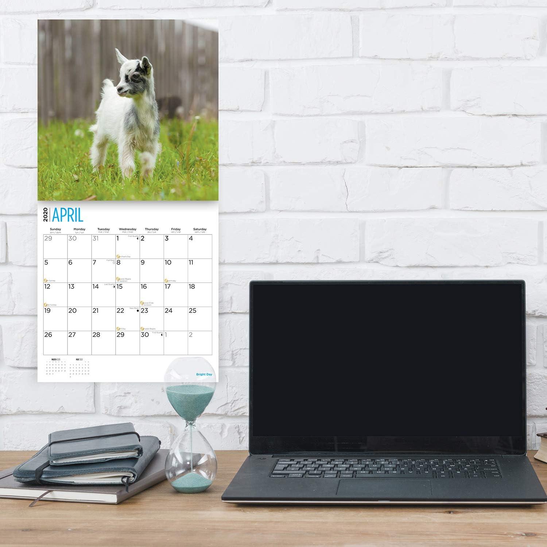 2020 Goats Calendar 16 Month 12 x 12 Wall Calendar by Bright Day Calendars Calendars for a Cause Wall Calendar