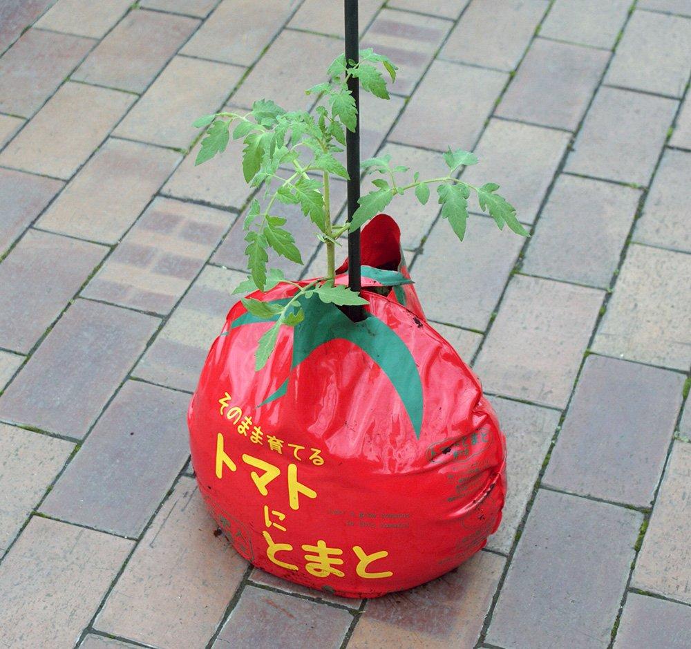 プロトリーフ トマトにとまと培養土 16L