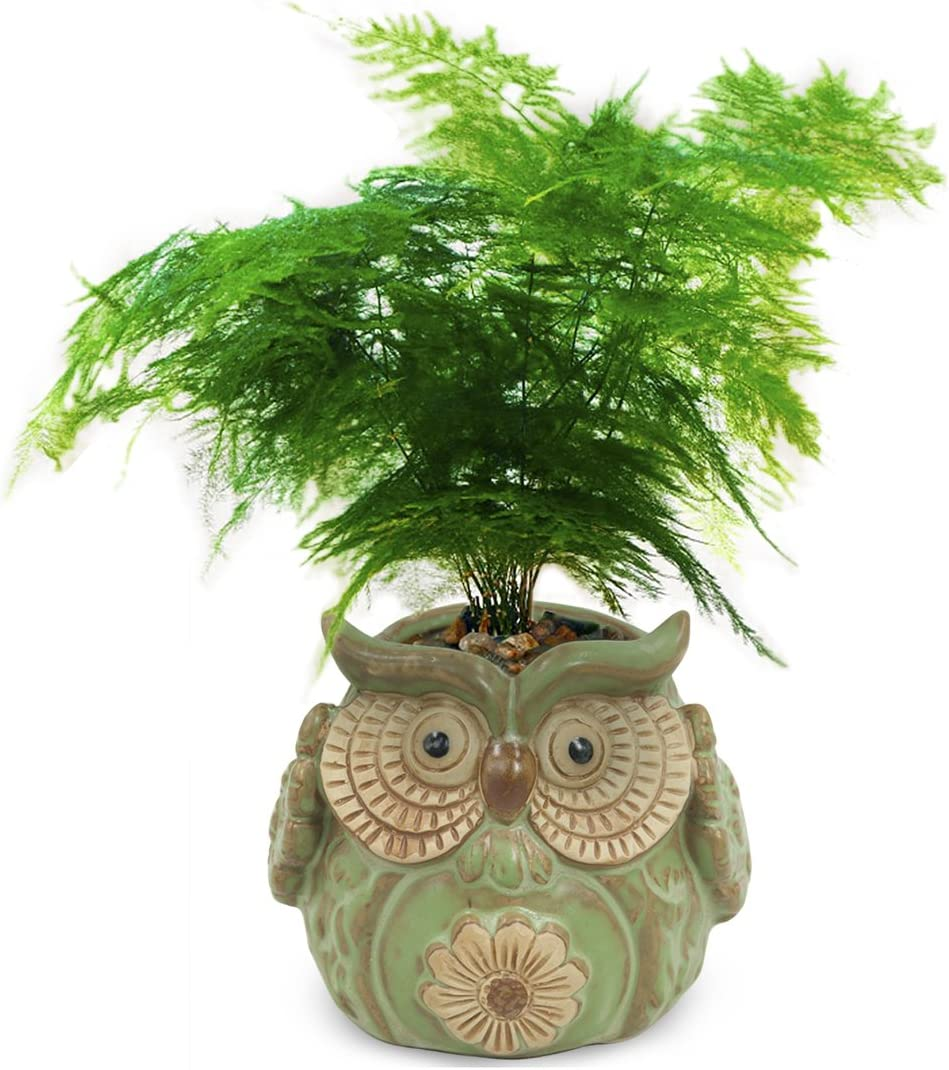 Dahlia Vintage Cute Owl Handmade Ceramic Succulent Planter Plant Pot Flower Pot Bonsai Pot