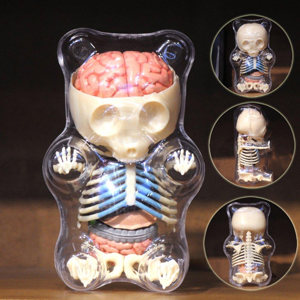 Amazon.com: 4D Vision Animal Anatomy - Gummi Bear Skeleton Anatomy ...