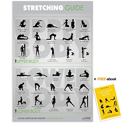 Alpine Choice Laminated Stretching Guide Gym Poster - Large 30x20 Chart