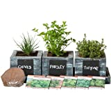Herb Garden Planter by Planter Pro's - Complete Herb Garden Kit - Indoor Garden Seeds Growing Kit - Grow Cooking Herbs Basil, Chives, Oregano, Parsley & More - Cedar Wood Planter
