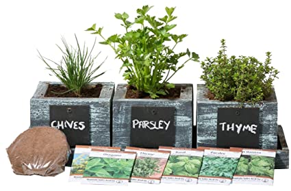 Amazon herb garden planter by planter pros complete herb herb garden planter by planter pros complete herb garden kit indoor garden seeds growing workwithnaturefo