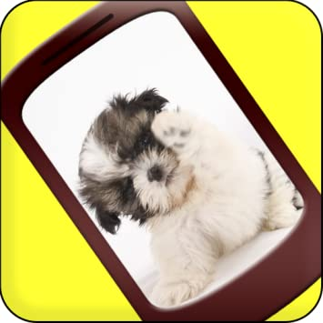 Shih Tzu Dog Live Wallpaper