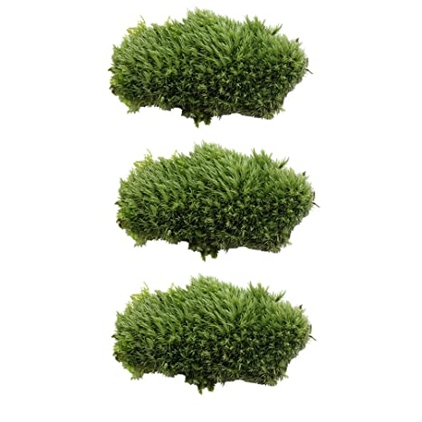 UEETEK 3 pcs musgo verde para la decoración del acuario,plástico artificial musgo submarino para