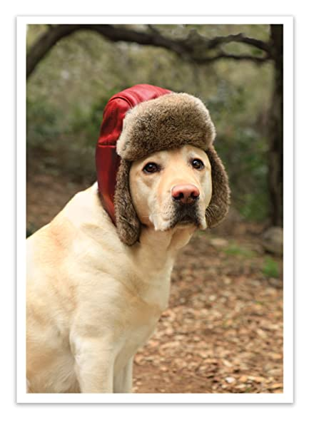 Amazon.com : 12 \'Dog with Fur Cap\' Christmas Cards with Envelopes ...
