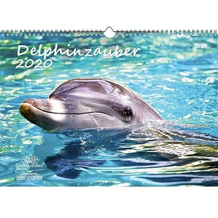 Delphinzauber - Calendario 2020, DIN A3, delfín de regalo, con 1 ...