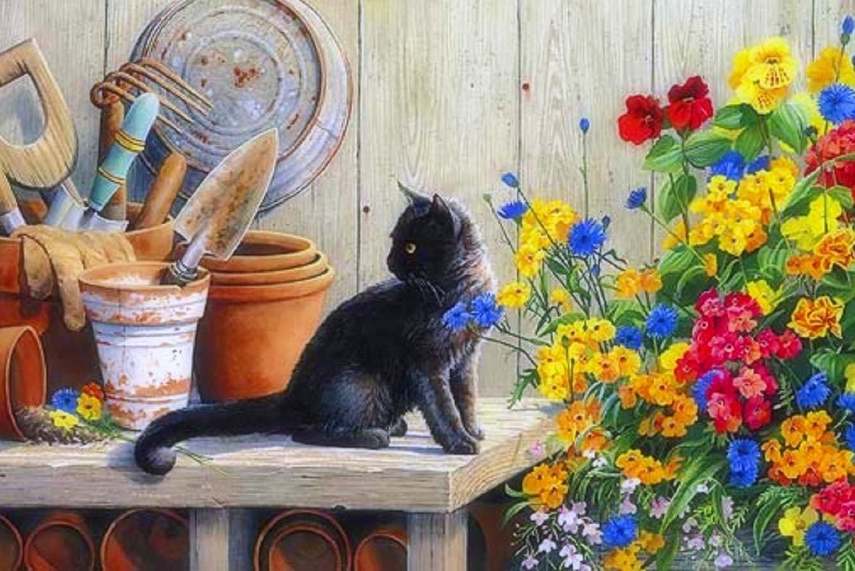 5D Pintura por Diamantes (5100) gato