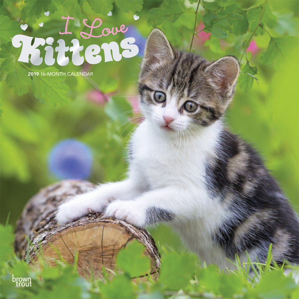 I Love Kittens 2019 12 x 12 Inch Monthly Square Wall Calendar with Foil Stamped Cover, Animals Cats Kittens Feline (Multilingual Edition)