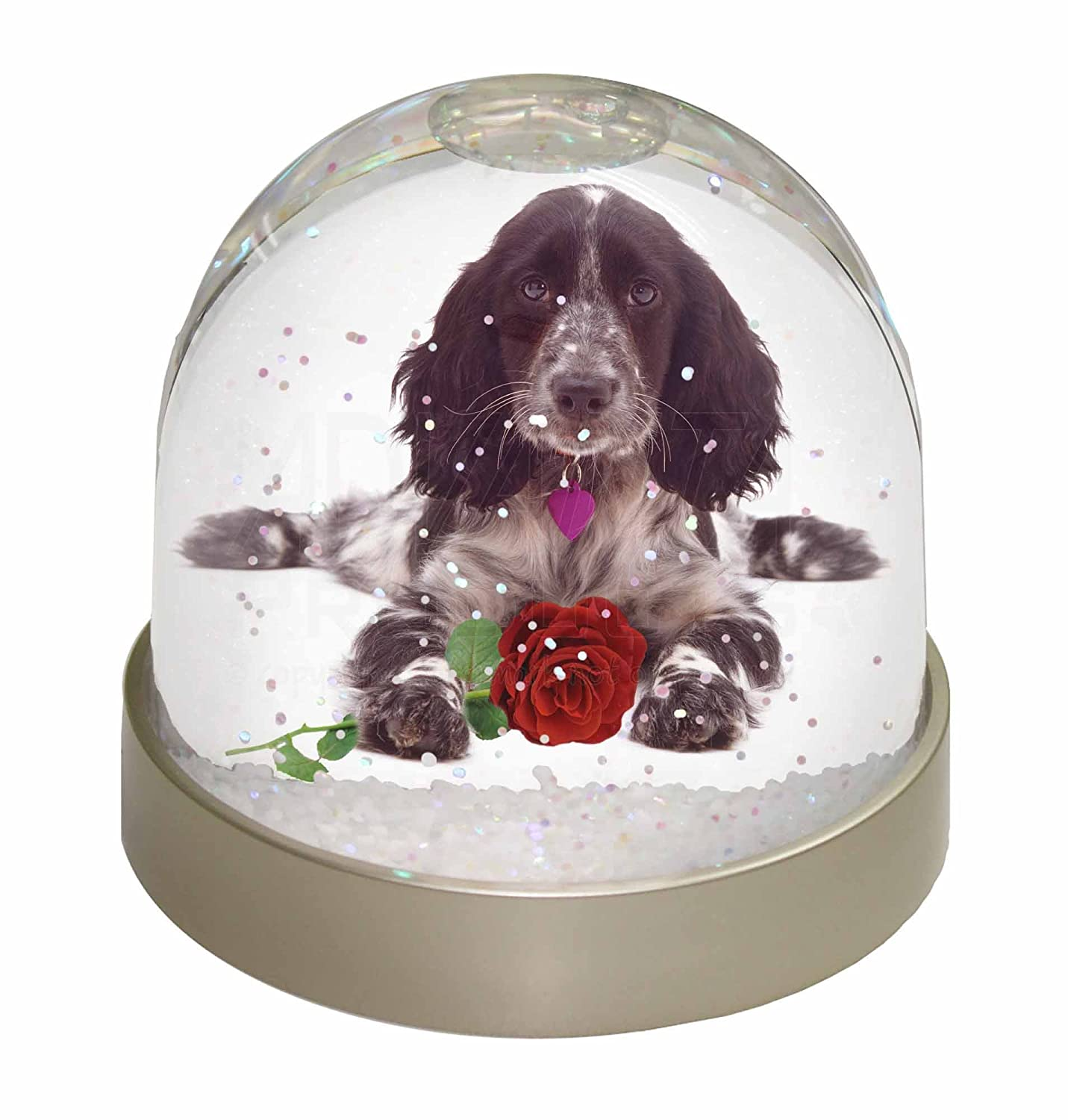 Advanta Blue Roan Cocker Spaniel with Rose Photo Snow Globe Waterball Stocking Filler Gift, Multi-Colour, 9.2 x 9.2 x 8 cm Advanta Products AD-SC13RGL