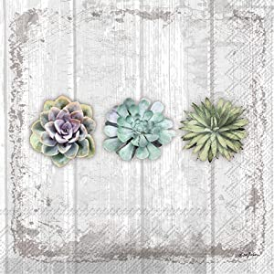 Boston International IHR Cocktail Beverage Paper Napkins, 5 x 5-Inches, Succulents Still