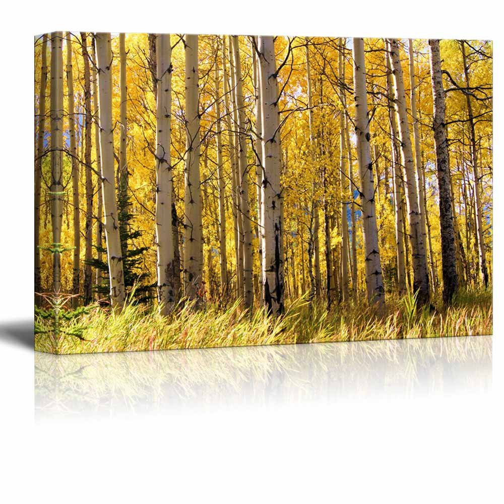 Bare Trees and Tree Branches in a Forest Wall Decor ation - Canvas ...