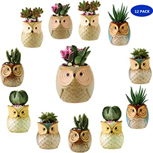 YLINGSU 2.5 Inch Owl Succulent Plants Pots Ceramic Set, Cactus Plant Pot,Mini Flower Pot, with A Hole Perfect owl Gifts (12 Pack)