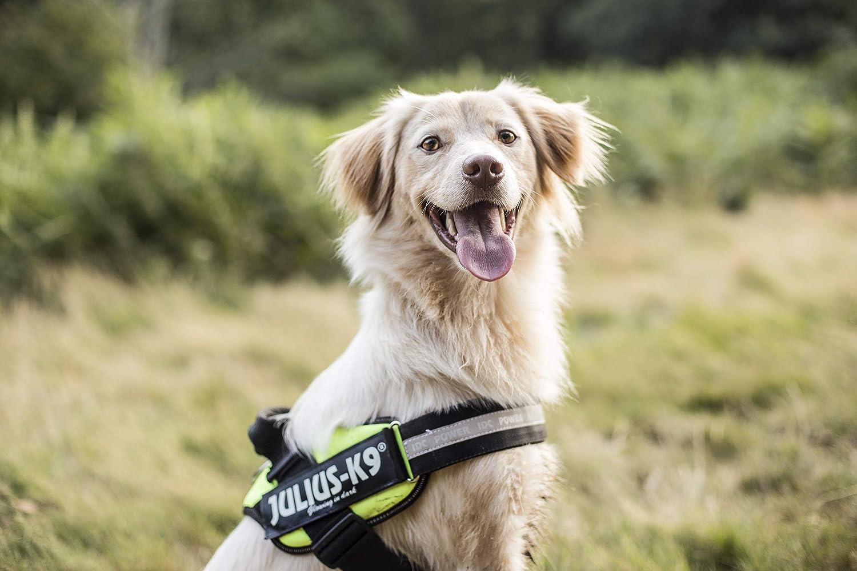 Julius-K9/IDC-Powerharness Harnais pour chien
