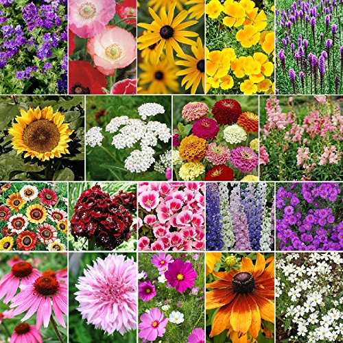 Late Bloomer - Fall Blooming Wildflower Seed Mix - 10 Pounds, Mixed by Eden Brothers (Image #1)