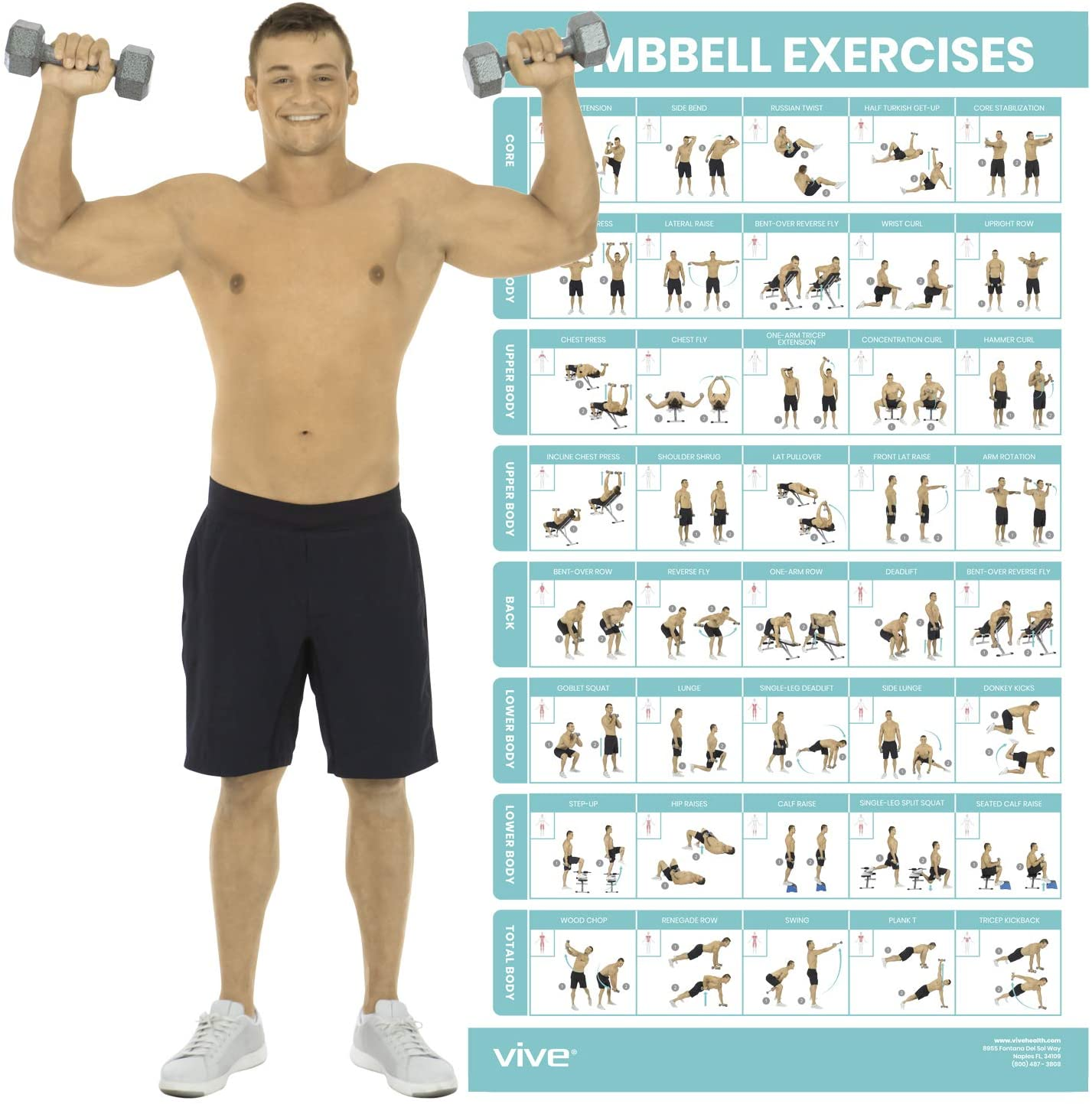 Free Weight 2 Pack Dumbbell Workout Exercise Posters Volume 1 /& 2
