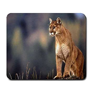 Snap cougar review
