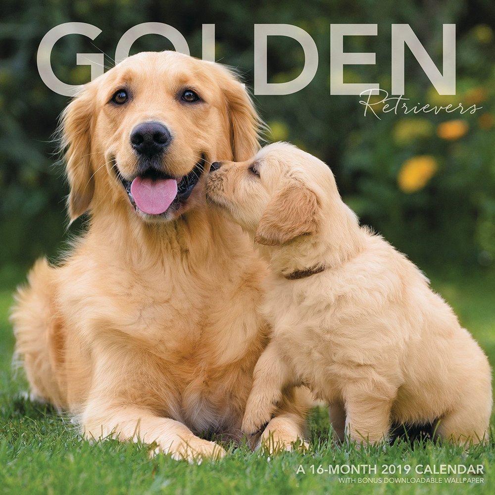 Download Golden Retrievers Wall Calendar (2019) pdf epub