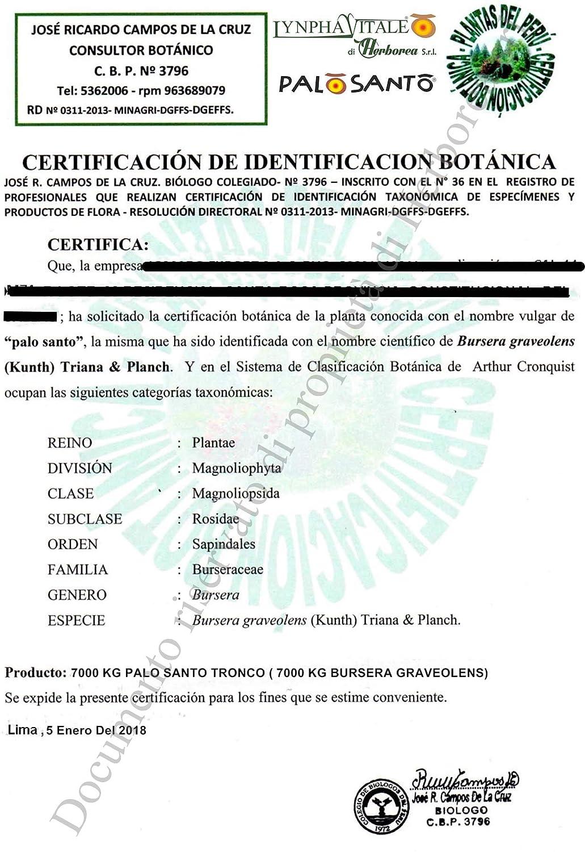Incienso Natural Palo Santo - Palitos Variedad Amarillo - 12 Palitos - Aroma balsámico y Fresco - Original Bursera Graveolens ecuatoriano - Recupera ...
