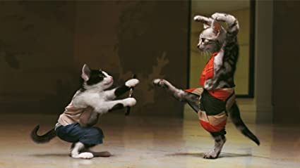 Athah Designs Sfondi Gratis Divertenti Gatti Karate Pazzi Sfondo