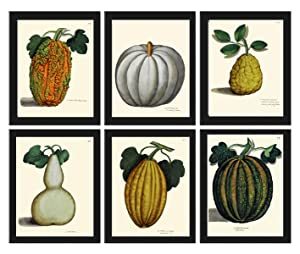 Botanical Set of 6 Prints Antique Beautiful Pumpkin Gourd Squash Green White Orange Fall Green Garden Plants Nature Home Room Decor Wall Picture Art Unframed ALD
