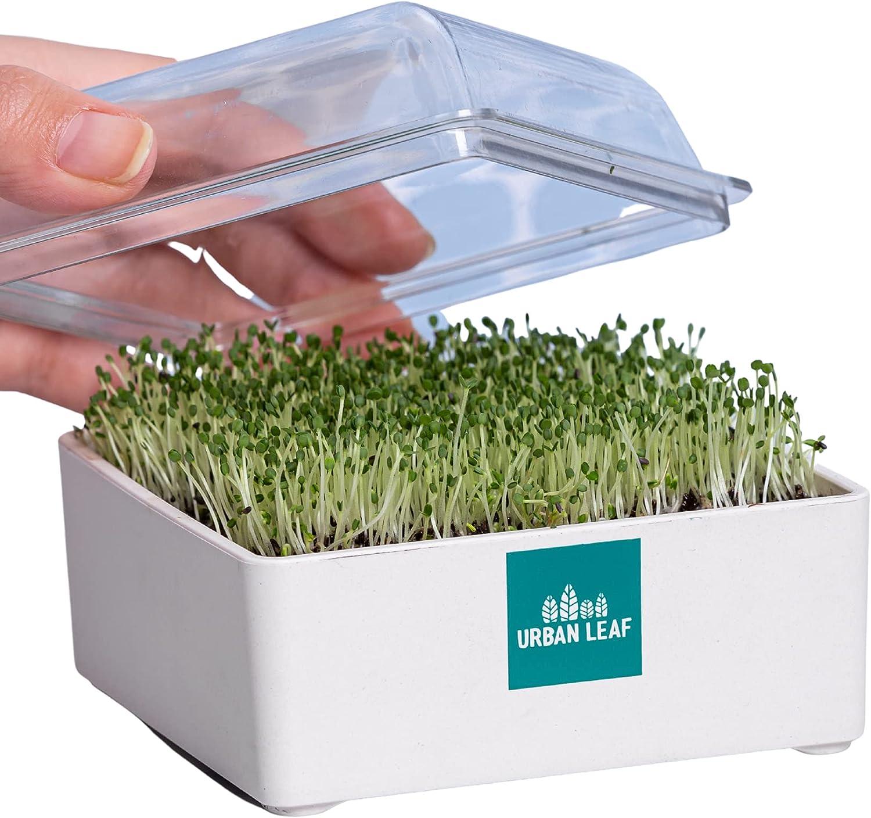 Microgreens Growing Kit, Organic Micro Garden Sprouts, Grow Greens Gardening Starter Kit, Just Add Water
