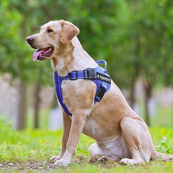 FML Pet - Arnés de entrenamiento para perro con correas ...