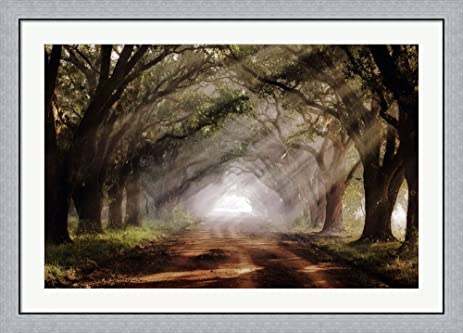 Amazon.com: Evergreen Plantation by Mike Jones Framed Art Print Wall ...
