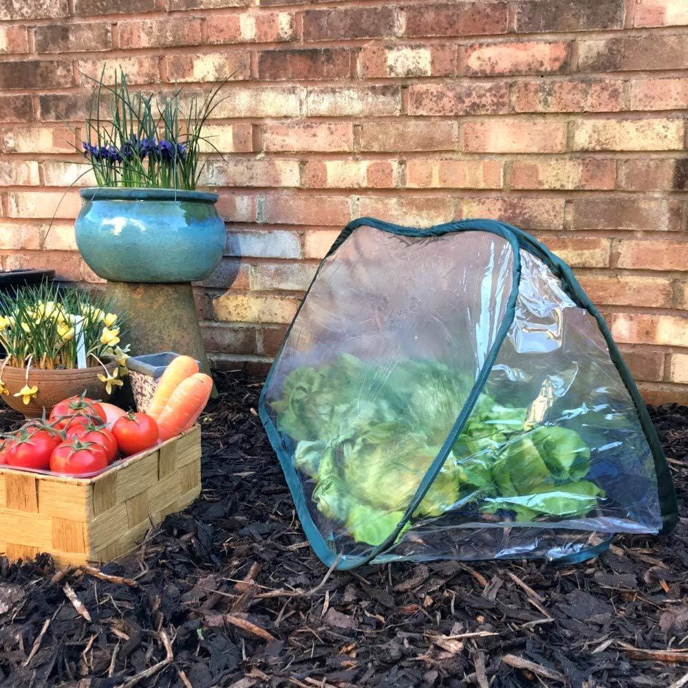 Pequeño invernadero de jardín / túnel de cultivo para plantas ...
