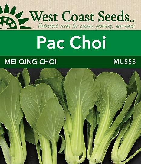 Oriental-vous Qing Choi 40 graines