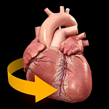 Amazon Heart 3d Atlas Of Anatomy Appstore For Android