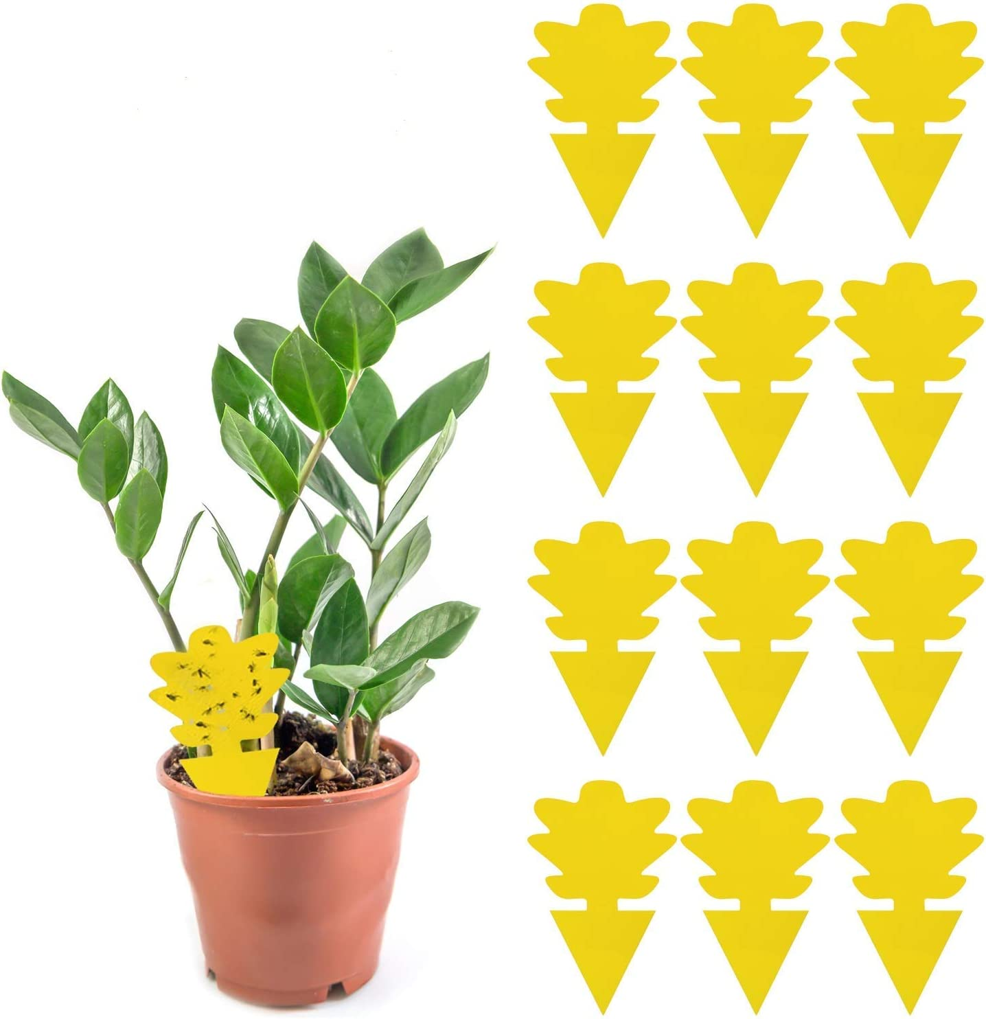 12 Pack Sticky Trap, Fruit Fly and Fungus Gnat Trap Killer Indoor and Outdoor, Protect The Plant, Non-Toxic and Odorless(Tree-A2 Shape)