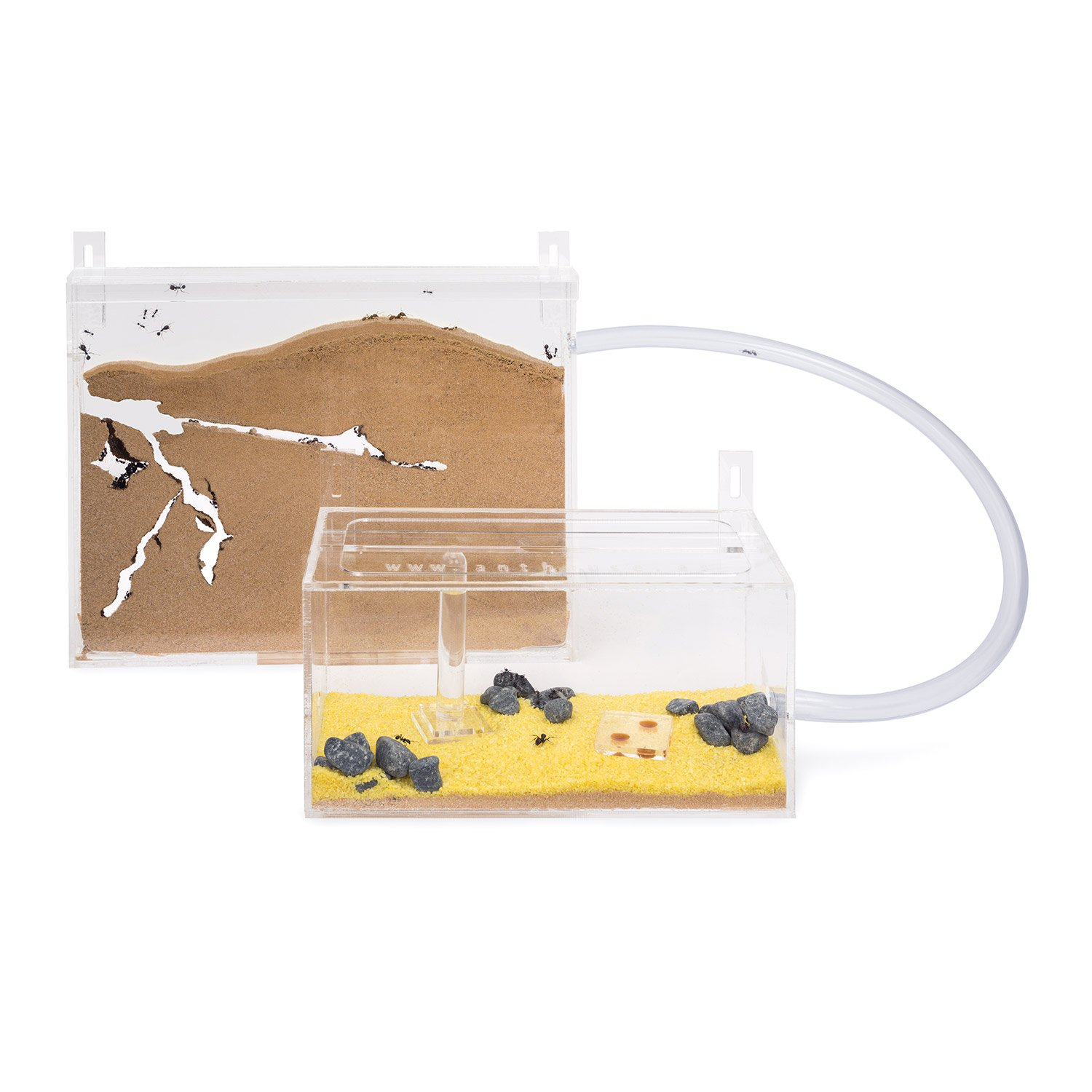 Ant Farm Wall Kit BIG with free Ants and Queen - Educational formicarium for LIVE ants AntHouse