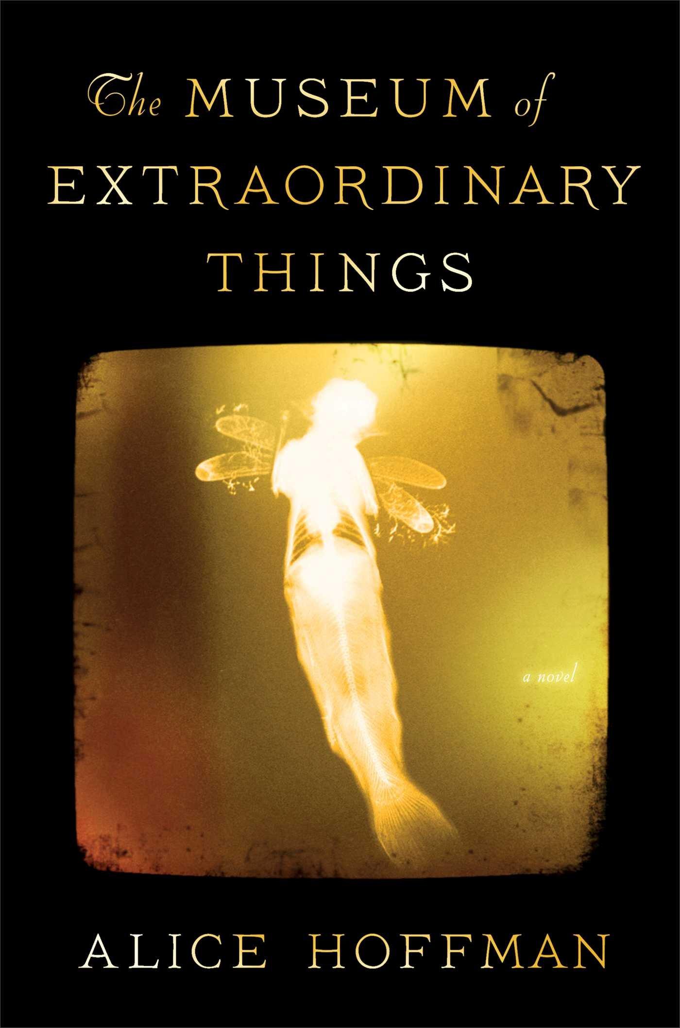 Image result for museum of extraordinary things