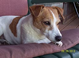 Amazon.com : Mattie's healthy treats for dogs with kidney