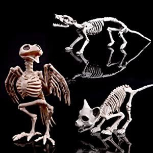 FUN LITTLE TOYS Halloween Animal Skeleton Set 3pcs Yard Decorations Perfect for Indoor/Outdoor Use (Rat Cat Crow)