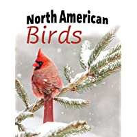 North American Birds: Extra-Large Print With Names (For Adults With Dementia and...