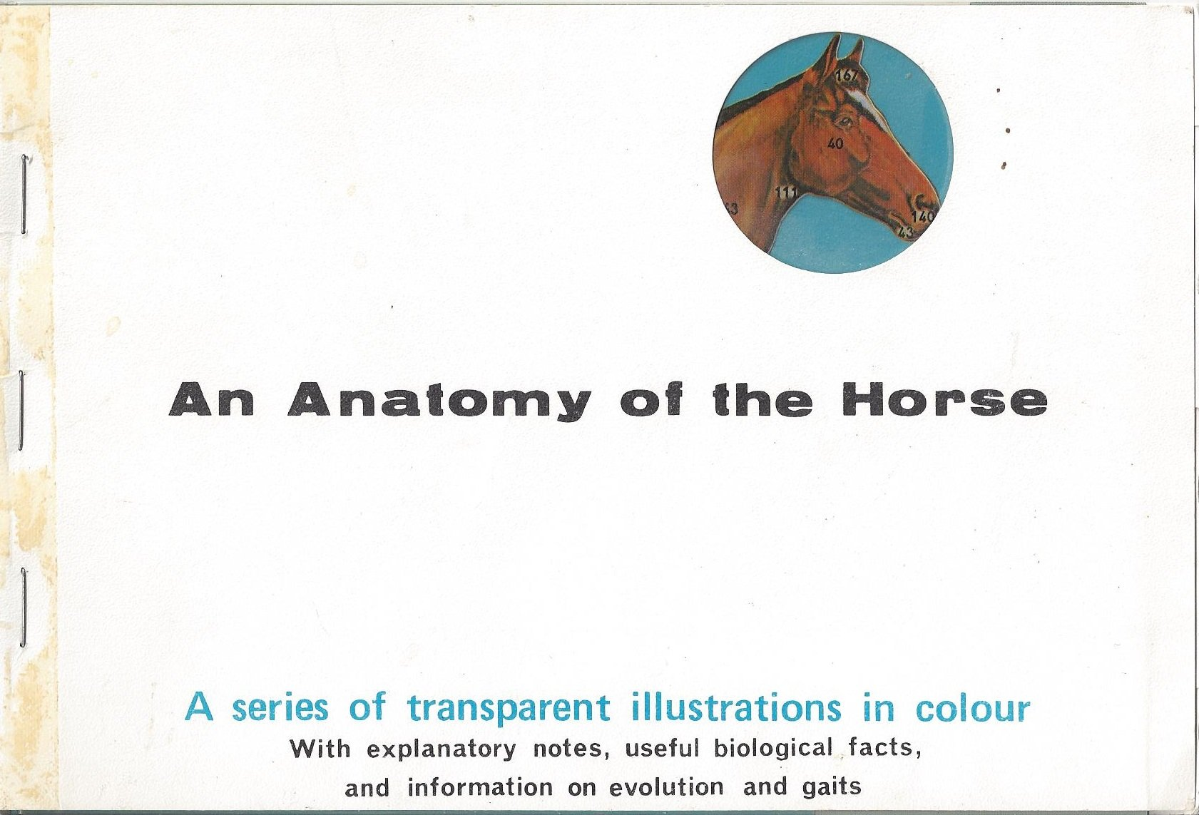 An Anatomy Of The Horse A Series Of Transparent Illustrations In