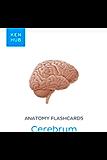 Anatomy flashcards: Cerebrum: Learn all organs and terminology on the go (Kenhub Flashcards Book 35)