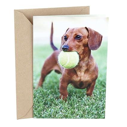 Amazon Hallmark Shoebox Funny Birthday Greeting Card For Him