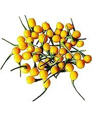 IDEA HIGH 100 Aji Charapita Hot Pepper Seeds -Wild Chili Peru- -Shipping from Germany-