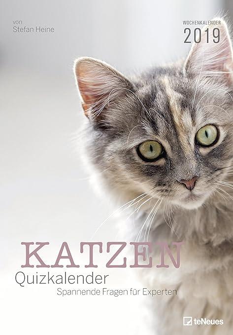 Gatos – Quiz Calendario – Calendario semanal 2019 – teneues de Verlag – Stefan Heine –
