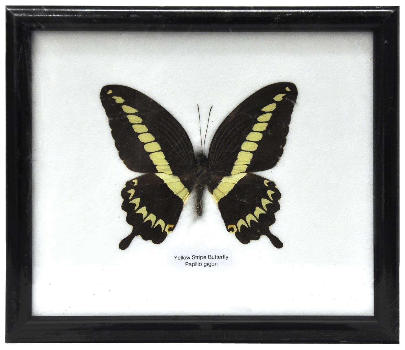 Schmetterling im Bilderrahmen,Yellow Strip butterfly: Amazon.de ...