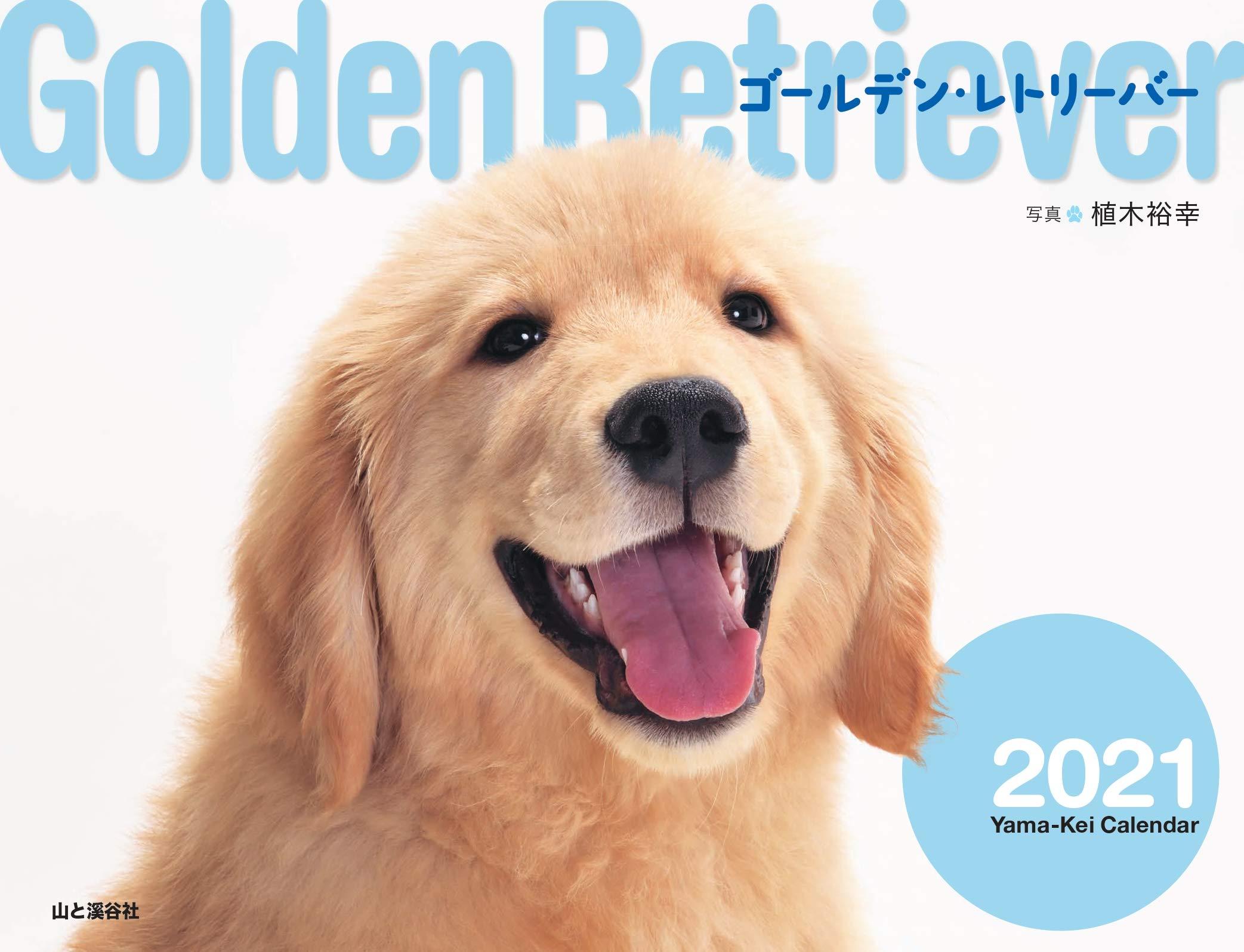 万 円 ゴールデン レトリバー 3