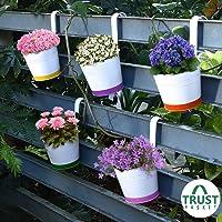 TrustBasket Crown of Colors Railing Planters - Set of 5 (Green, Orange, Pink, Purple, Yellow)
