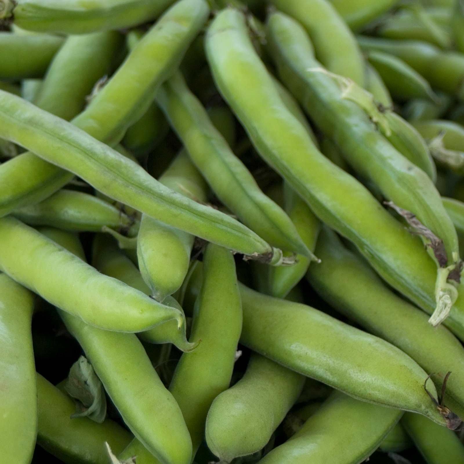 Roma II Bush Bean Seeds - 5 Lb - Non-GMO, Heirloom Green Snap Roma 2 Bean Seeds - Vegetable Garden Seeds